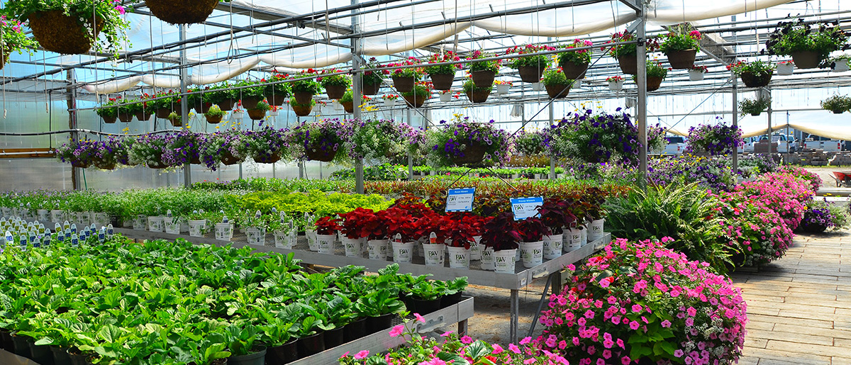 Johnston's Greenhouse Garden Center