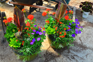 Container Gardening prepared by Johnston's Greenhouse